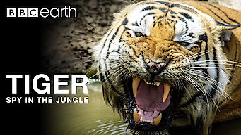 Tiger: Spy in the Jungle: Series 1